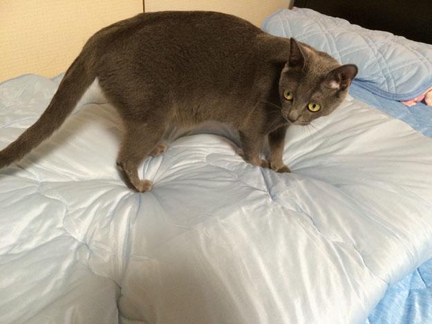 ニトリのNクール寝具