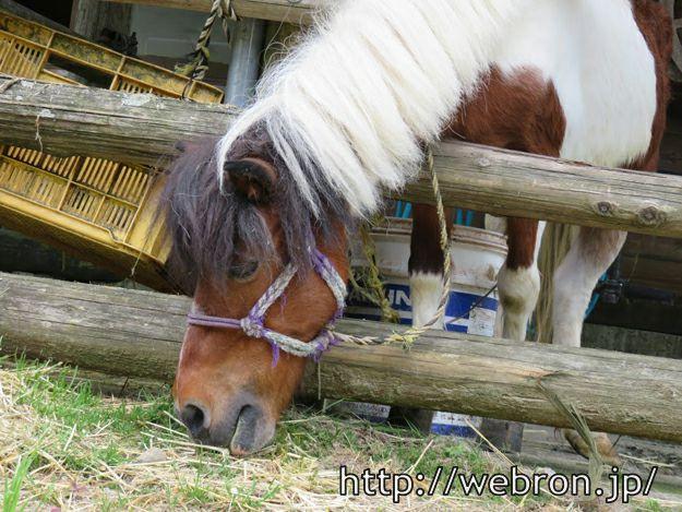 餌食べてる 馬さん