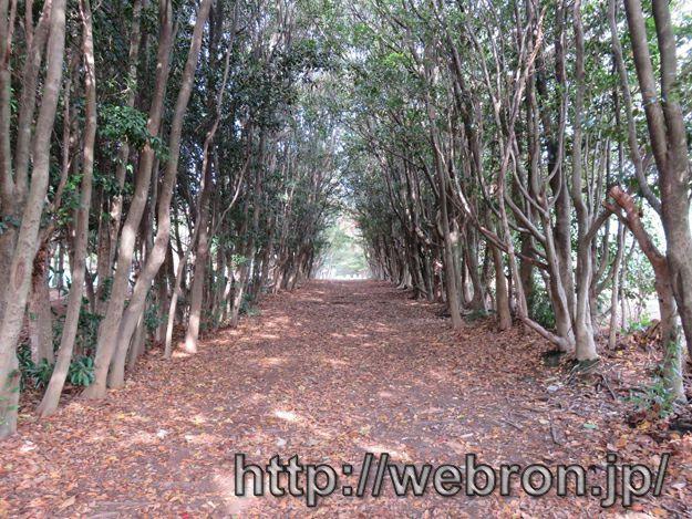 愛知県大府市の大府みどり公園感想…小学生向けの大きな公園