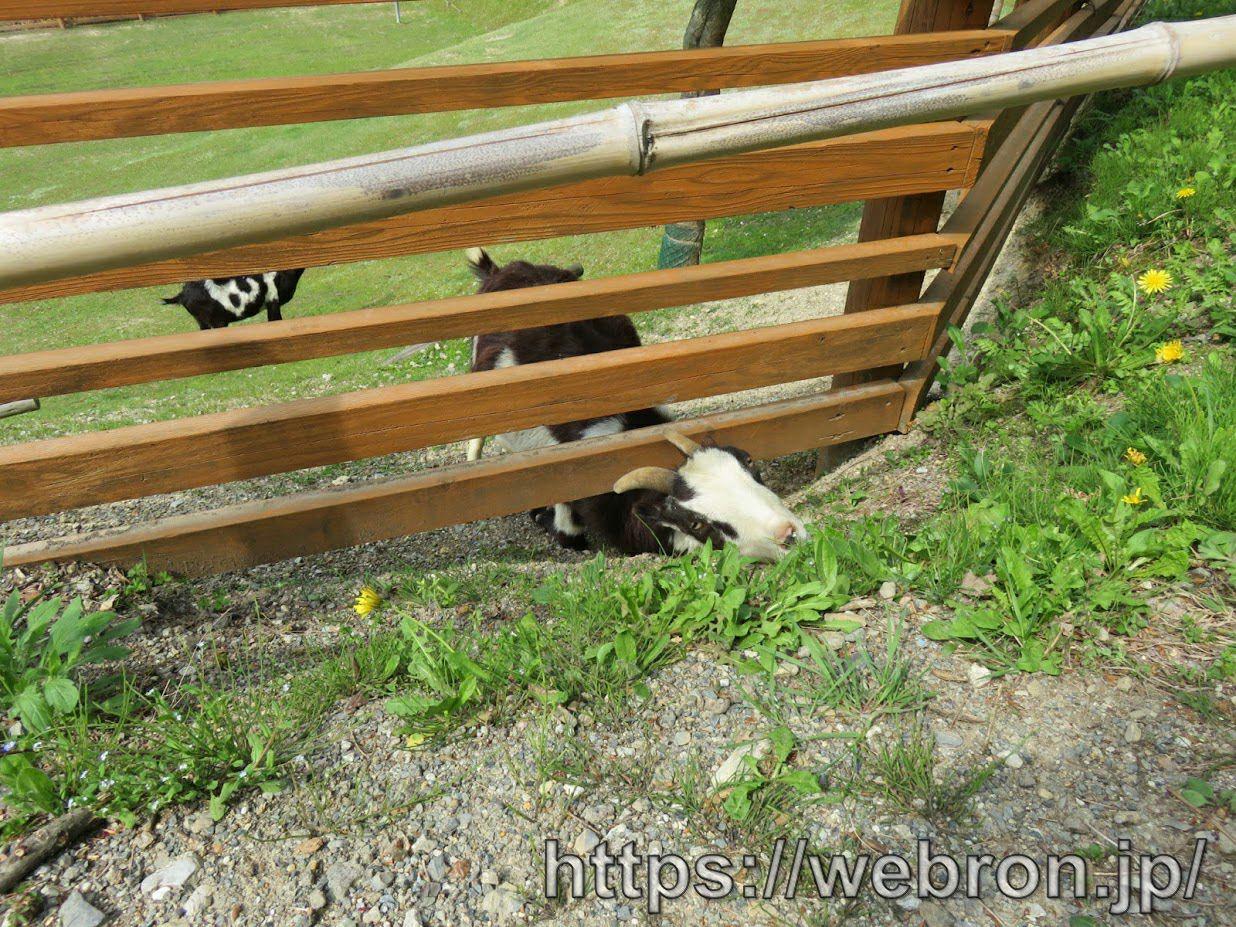 ちびっこ動物村のヤギ
