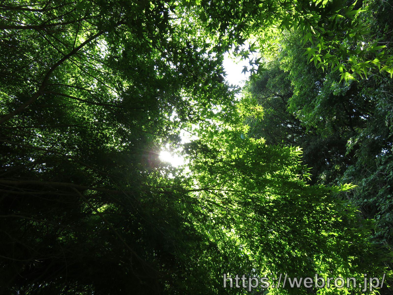 愛知こどもの国の森