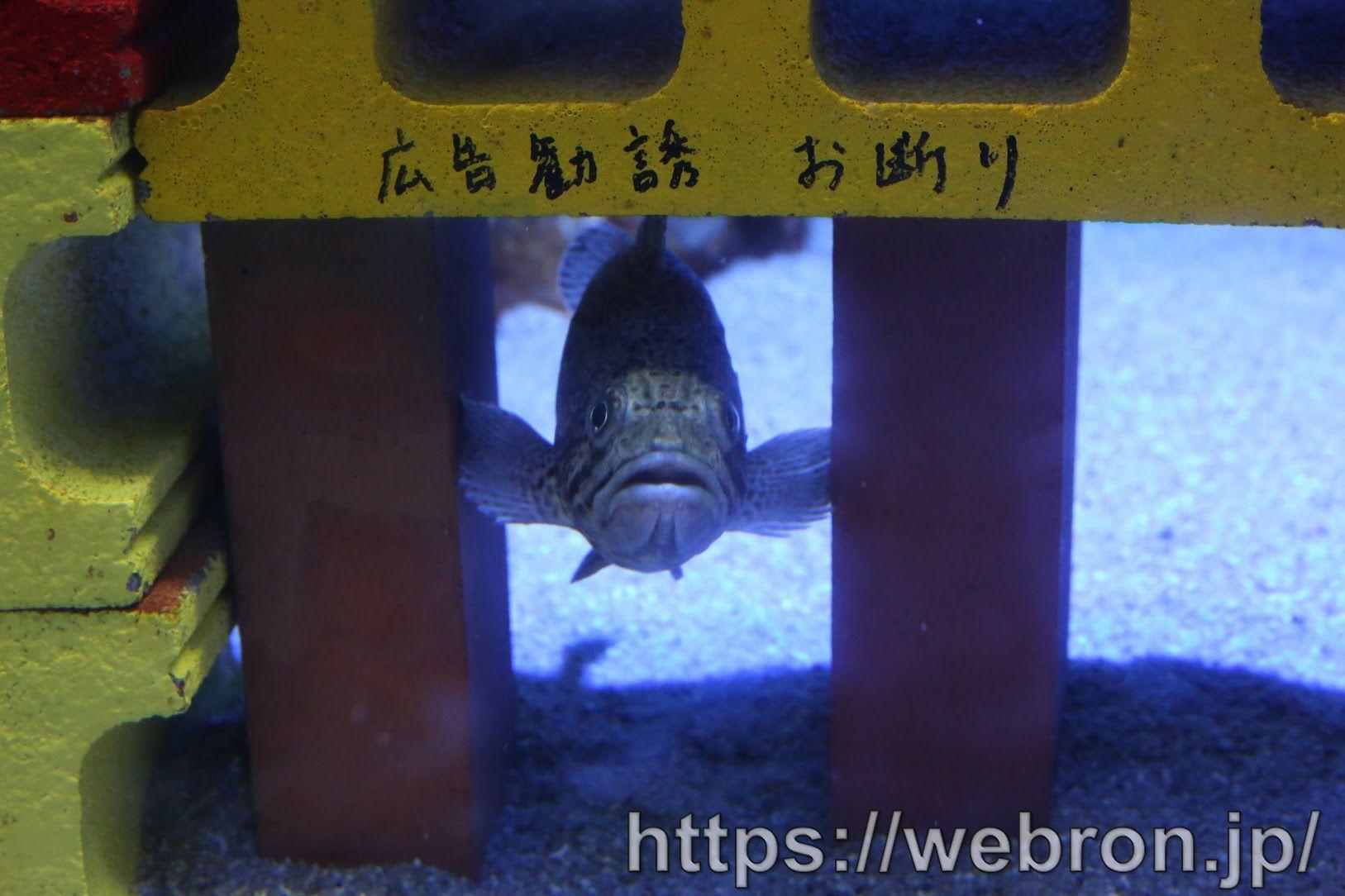 竹島水族館は魚の紹介文が面白いので結構オススメって話…入場料も安いし軽い気持ちで行くならベター